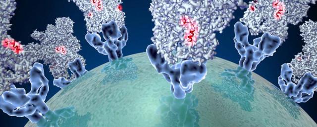 coronavirus-spike-protein-structure.jpg